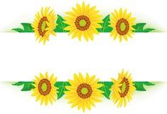Sunflower frame Stock Image