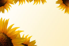 Sunflower frame illustration. Sunflower frame, yellow gradient background, scrapbook useful Royalty Free Stock Photography