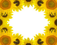 Sunflower frame isolated on white Stock Image