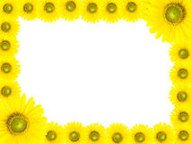 Sunflower frame Stock Photography