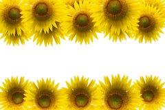 Sunflower frame isolated on white background. Stock Image