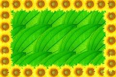 Sunflower frame on leaf background Royalty Free Stock Photo