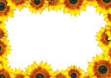Sunflower Frame with place for your text Royalty Free Stock Images