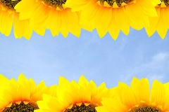 Sunflower frame Stock Photo