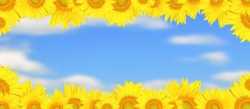 Sunflower frame. Sunny and bright sunflower frame Stock Photography