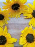 Sunflower frame on wooden background Stock Images