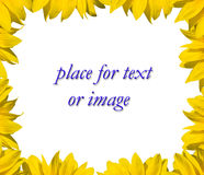 Sunflower frame for your text. Sunflower frame for text or image Royalty Free Stock Images
