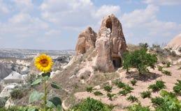 Sunflower & Rocks, Cappadocia, Turkey Royalty Free Stock Image
