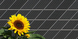 Sunflower in front of solar panels stock image