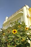Sunflower in front of the villa. Royalty Free Stock Photos