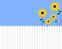 Sunflower Garden Stock Images