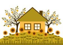 Sunflower garden. Sunflowers in garden isolated on white background Royalty Free Stock Image