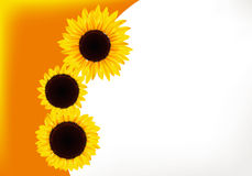 Sunflower gift card. Three bright sunflowers gift card Stock Photography