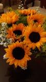 Sunflower. Girasol, sunlight, yellow, white Royalty Free Stock Photos