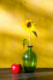 Sunflower in glass vase and red apple still life Stock Image