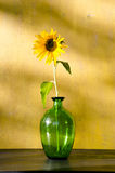 Sunflower in glass on yellow wall background. Royalty Free Stock Photo