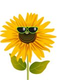 Sunflower in glasses Royalty Free Stock Photography