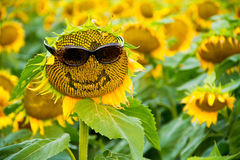 Sunflower with Glasses and a Smile Royalty Free Stock Images