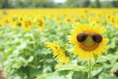 Sunflower and glasses Stock Photography