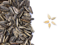 Sunflower grains and husked seeds Stock Photos