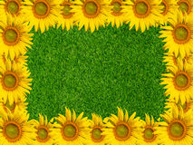 Sunflower on grass background Royalty Free Stock Photos