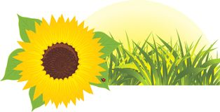 Sunflower with grass. Banner Royalty Free Stock Photos