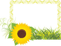 Sunflower with grass in the decorative frame Stock Image