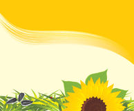 Sunflower with grass and pips. Background Stock Photography