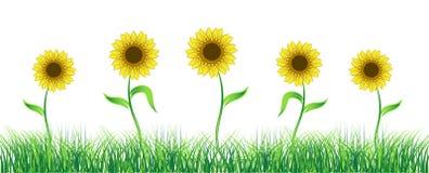 Sunflower on green field. Illustration Stock Photography