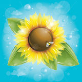 Sunflower and green leaves against blue sky Royalty Free Stock Photography