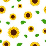 Sunflower with green leaves seamless pattern. Sunflowers on white background Stock Photo