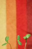 Sunflower greens. Three green sunflower sprouts in a colorful background Royalty Free Stock Photography