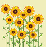 vector sunflower greeting card Stock Images
