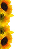 Sunflower greeting card. Stock Photography