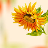 Sunflower. Greeting Card. Stock Image