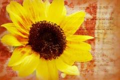 Sunflower grunge music background Stock Photo