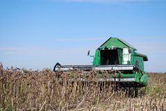 Sunflower harvest with combine Stock Images