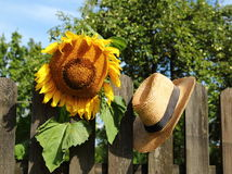 The sunflower hat Royalty Free Stock Photography