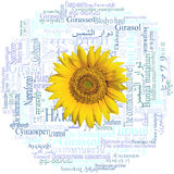 Sunflower head. Sunflower written in fifty-nine different languages. Word cloud. Stock Photos