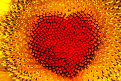 Sunflower heart Royalty Free Stock Images