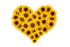 Sunflower heart. Royalty Free Stock Images