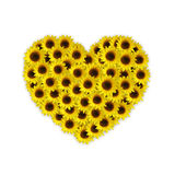 Sunflower heart Royalty Free Stock Photo