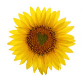 Sunflower with heart in center Stock Photos