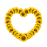 Sunflower heart image Royalty Free Stock Photography