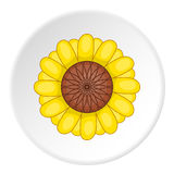 Sunflower icon, cartoon style. Sunflower icon. artoon illustration of sunflower vector icon for web Royalty Free Stock Image