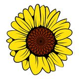 Sunflower icon, icon cartoon. Sunflower icon in icon in cartoon style isolated vector illustration Royalty Free Stock Photos
