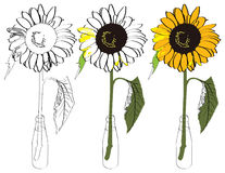 Sunflower illustration Royalty Free Stock Photography