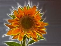 Sunflower illustration Stock Photos