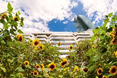 Free Sunflower In The Parisian Business District Royalty Free Stock Photo - 161378565