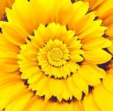 Sunflower infinity spiral abstract background. Royalty Free Stock Photo